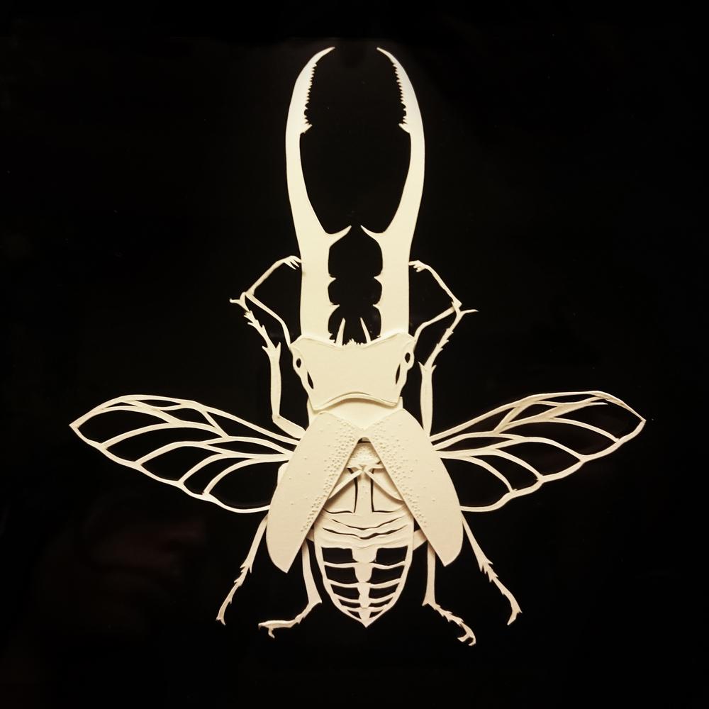 Cyclommatus metallifer - papercut