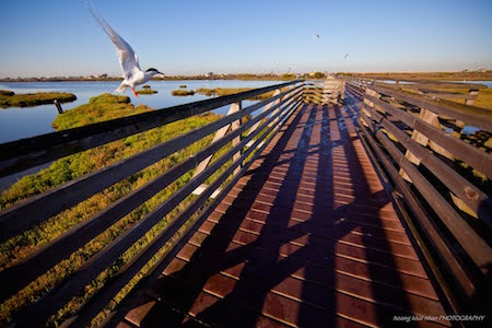 Bolsa Chica Wetlands & Reserve