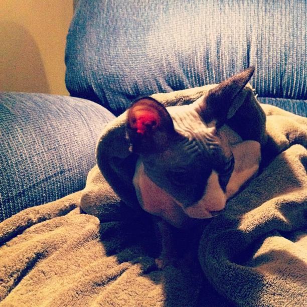 Zwiebel in a blanket (Taken with  instagram )