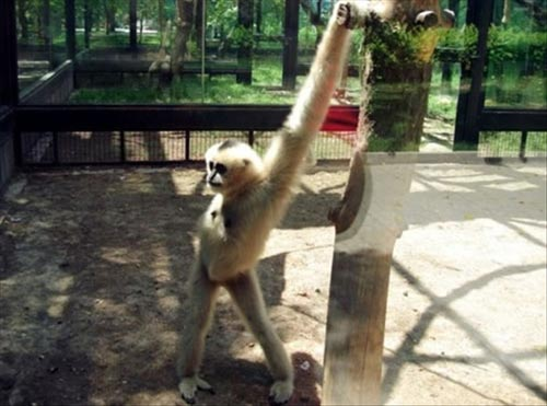 This is one fantastic monkey.   via  1.bp.blogspot.com