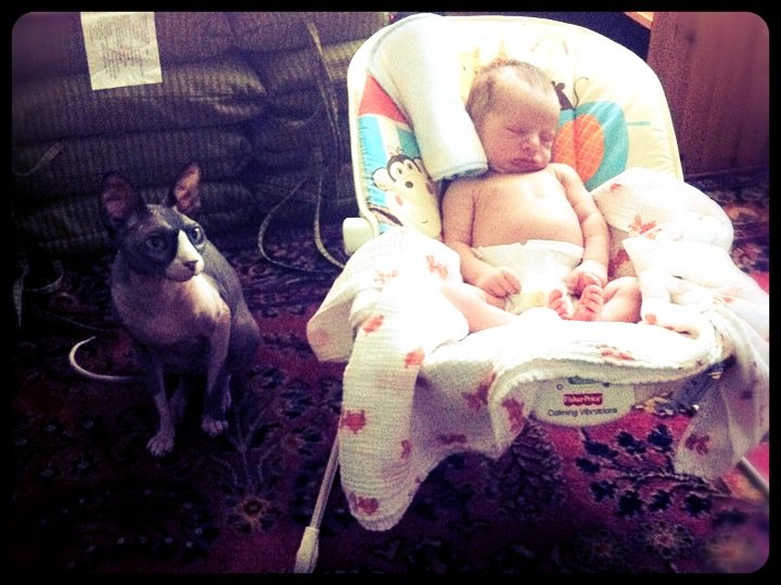 Convergent Evolution  Two hairless mammals. #baby #cute #cats (from  @mrknuffke  on Streamzoo)