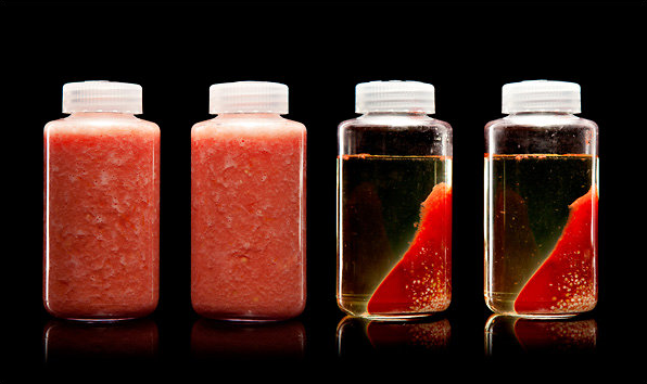 "Yummy!    freshphotons :     A centrifuge uses ultra-high-speed spinning to separate tomato juice (left) into layers of nearly clear tomato water, pulp and seeds (right). From "" Modernist Cuisine ""."