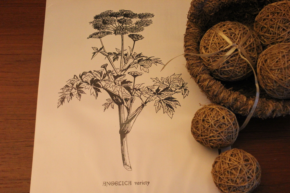 Botanical drawing of an Angelica plant with a Vetiver root basket and scented balls.