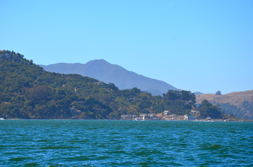 Even the lovely Mt. Tamalpais came out to play.