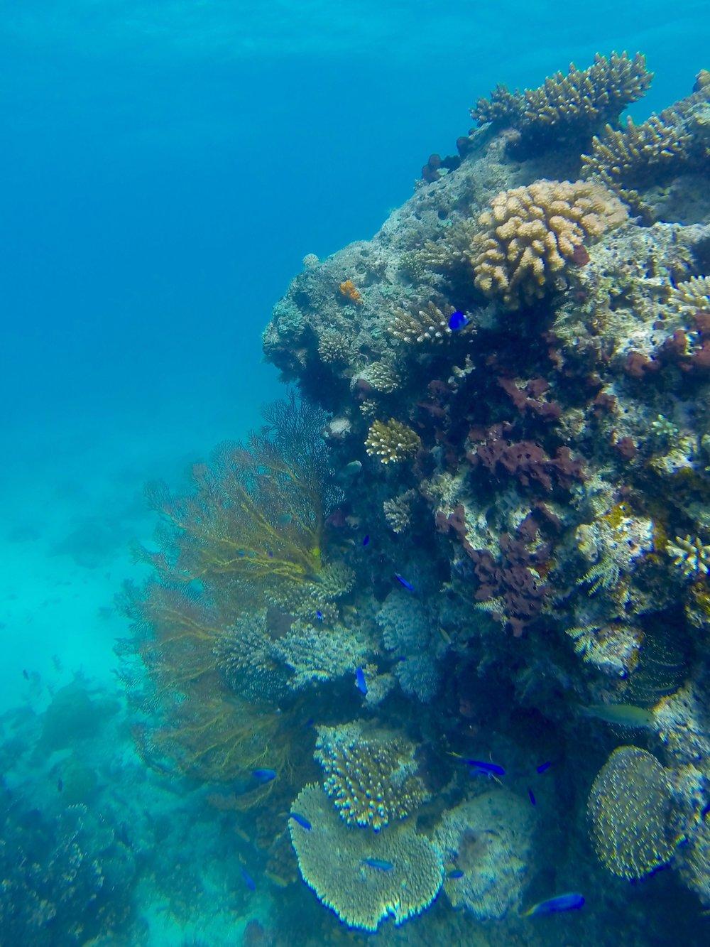 Fijian Coral.jpg