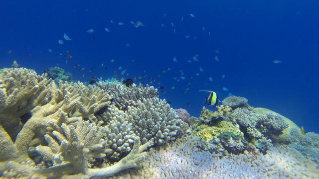CR_Underwater.jpg