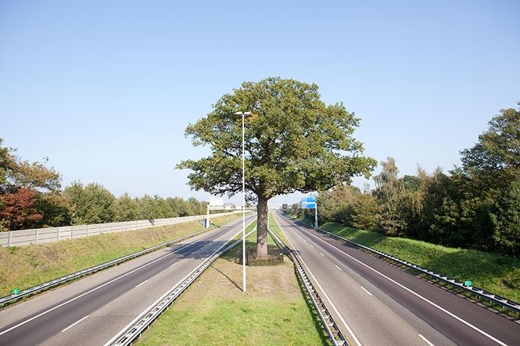 Tree, Breda 2011