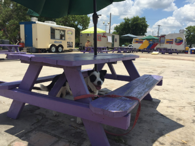 Once your dog has a doggy snow-cone from Mambo Freeze, they're a hitchin' pup for life. (Also, all of the dogs really like Wendy from WANderlust - she always has a special treat for the hitchin' pups!)