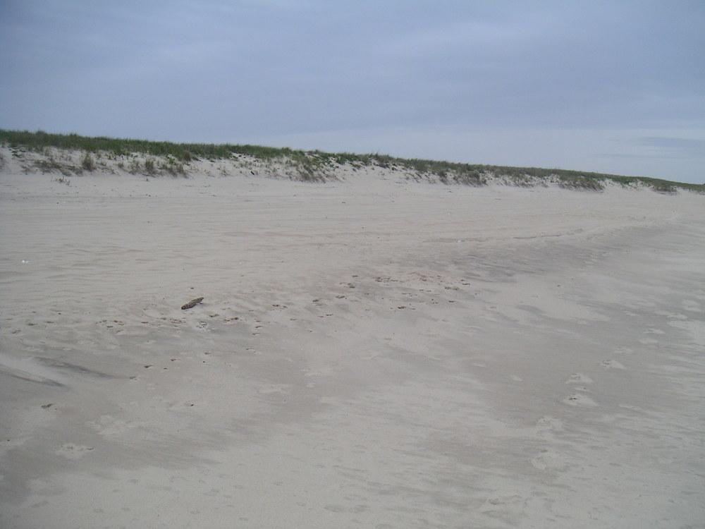 BEACH 4-08.JPG