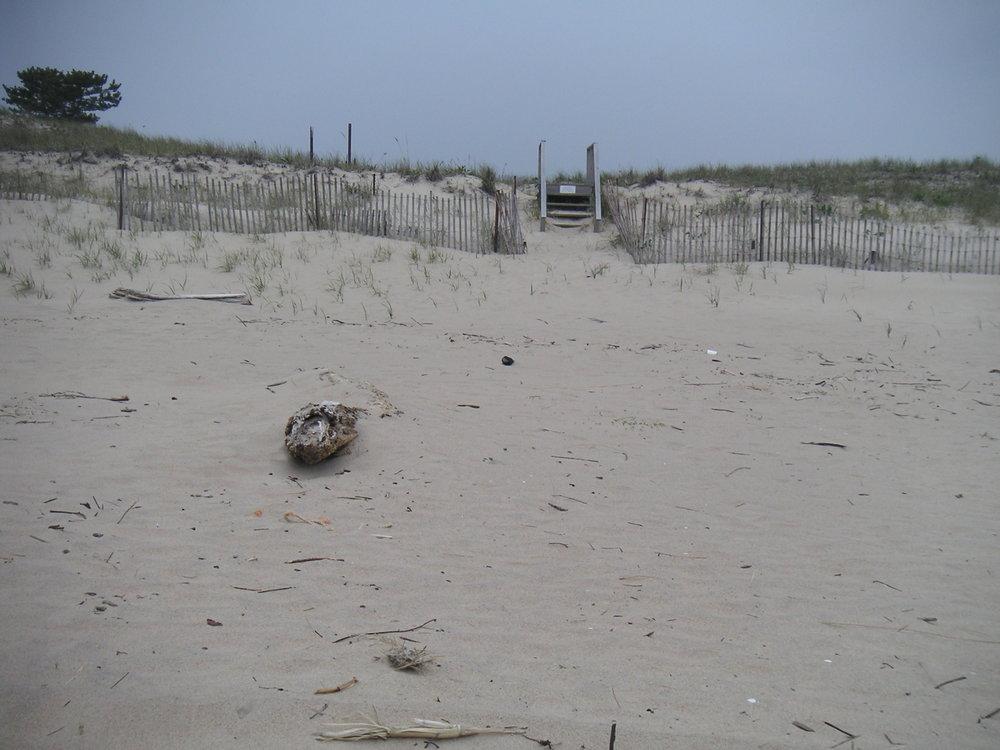 BEACH 3-08.JPG