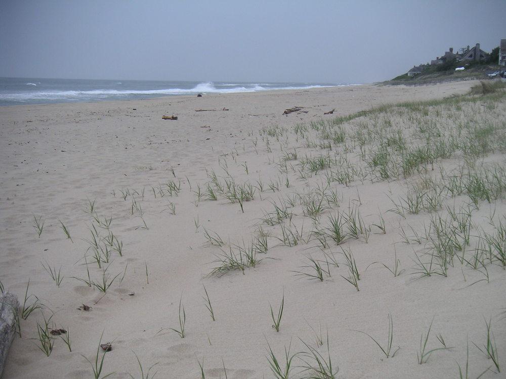 BEACH 3-09.JPG