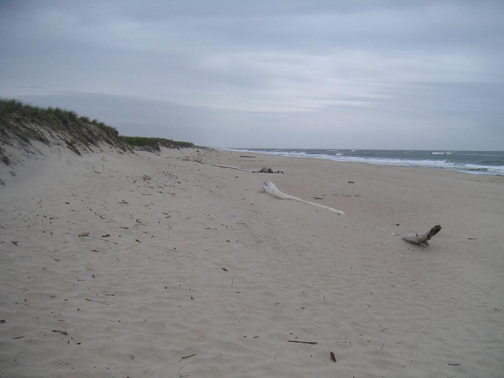 BEACH 1-05.JPG