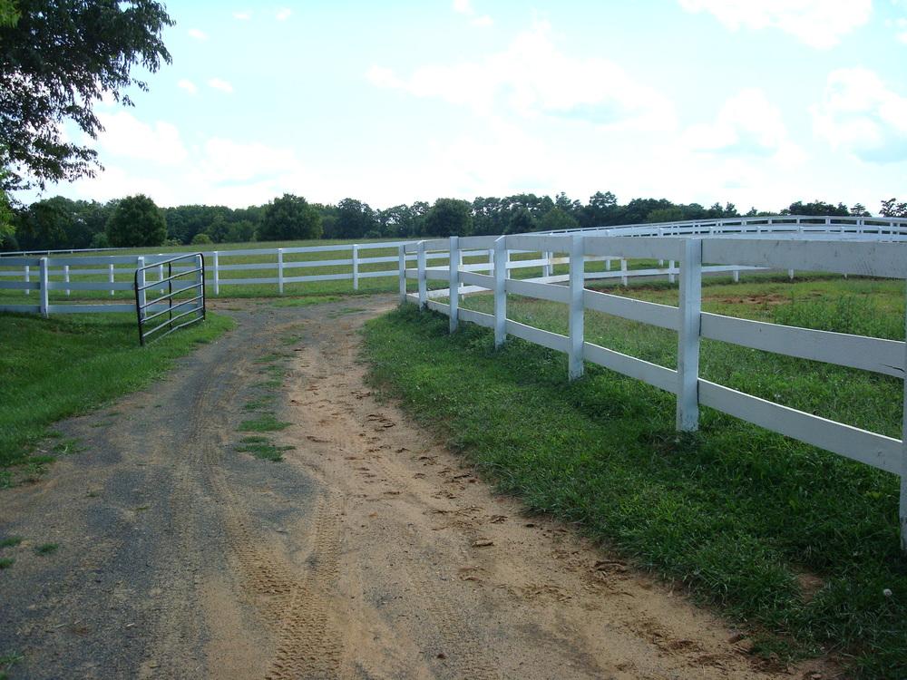 HORSES 1-08.JPG