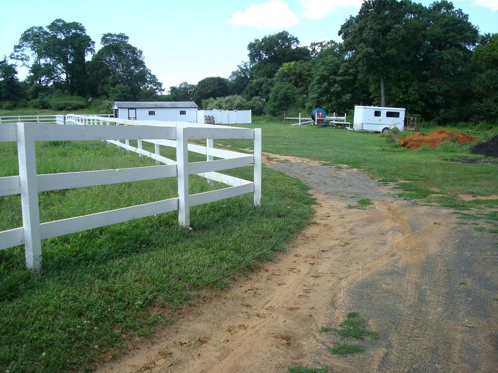HORSES 1-09.JPG