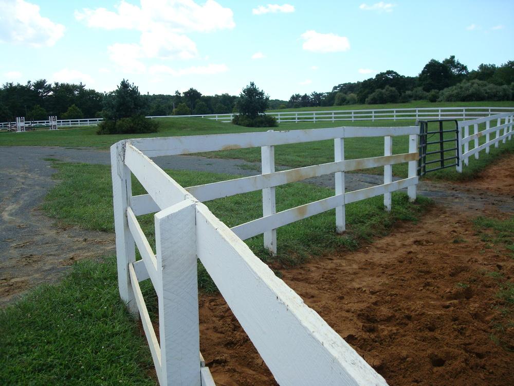 HORSES 1-10.JPG