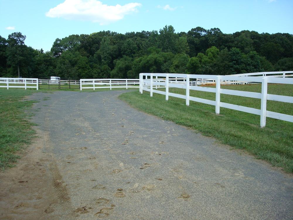 HORSES 1-11.JPG
