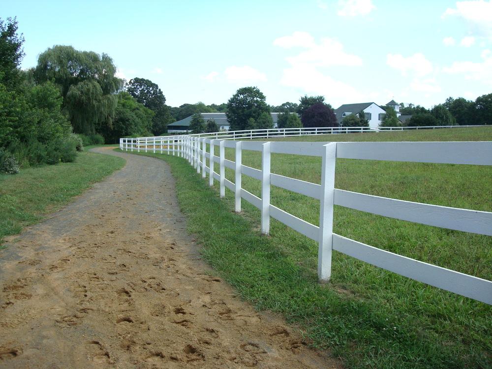 HORSES 1-18.JPG
