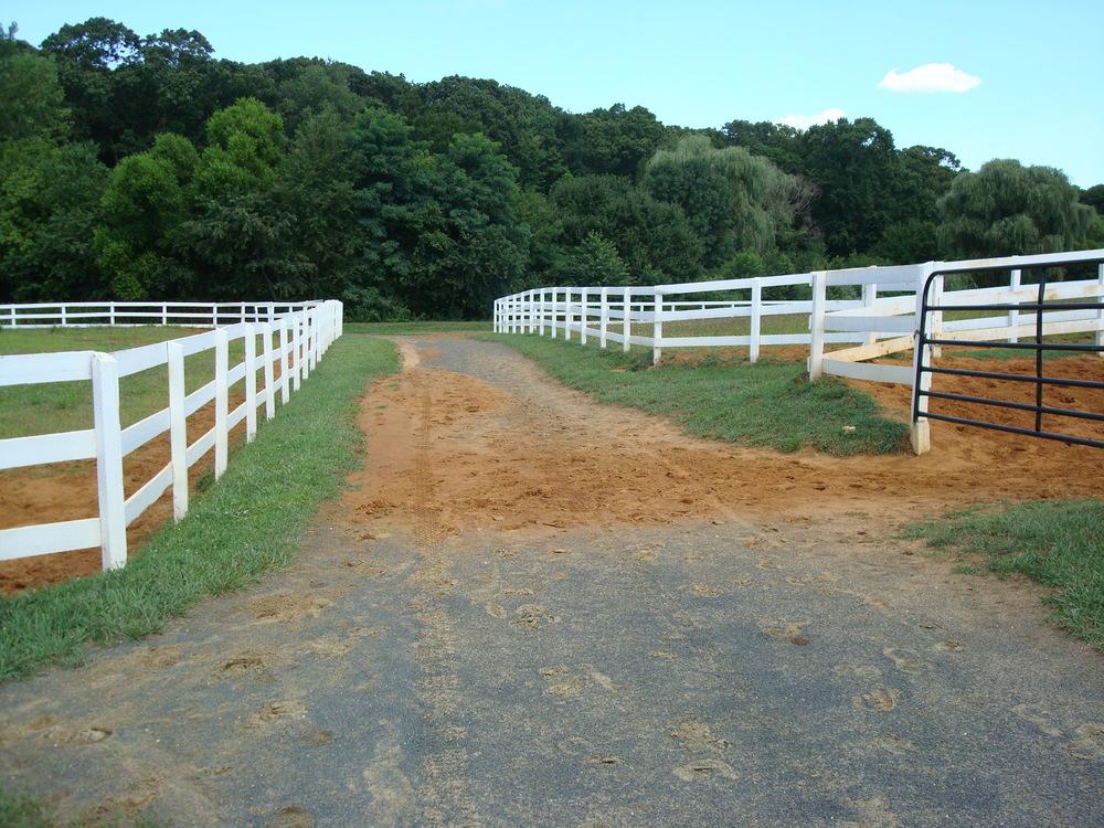 HORSES 1-19.JPG