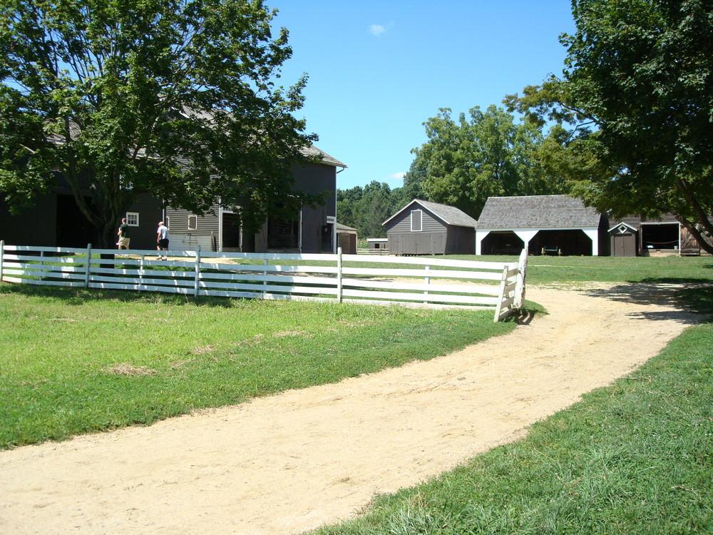 HORSES 2-06.JPG