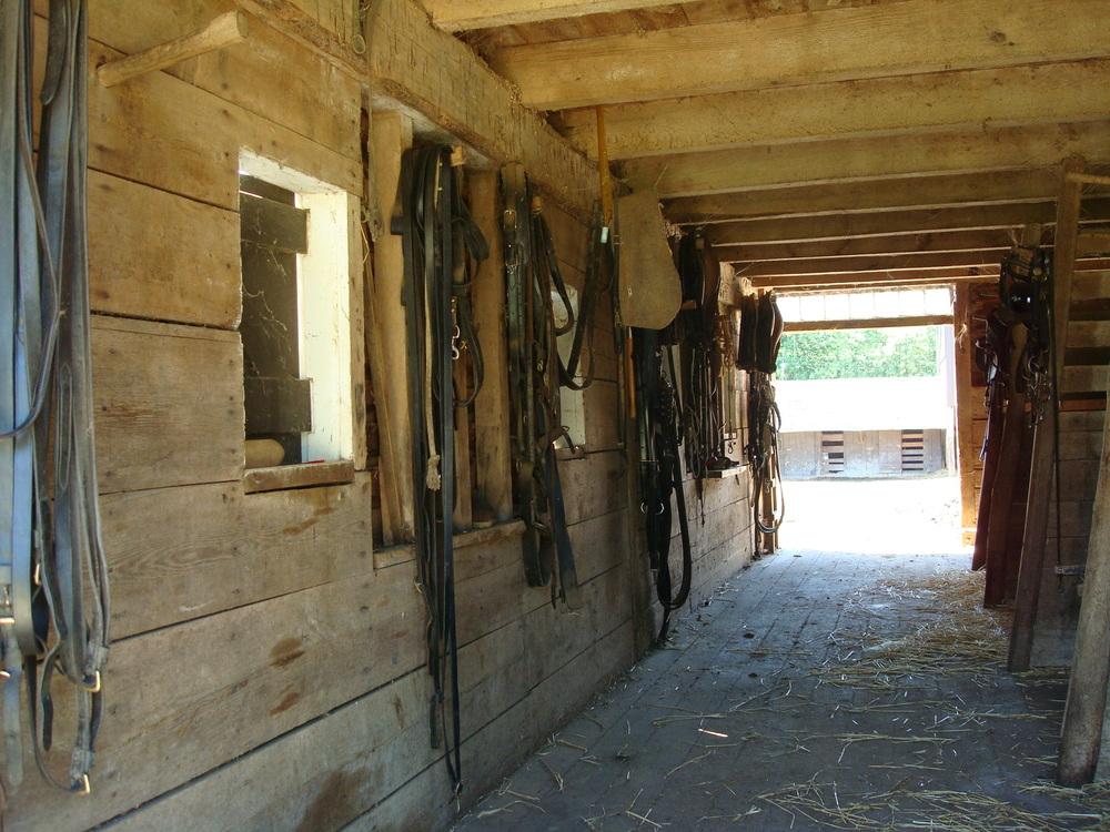 HORSES 2-22.JPG