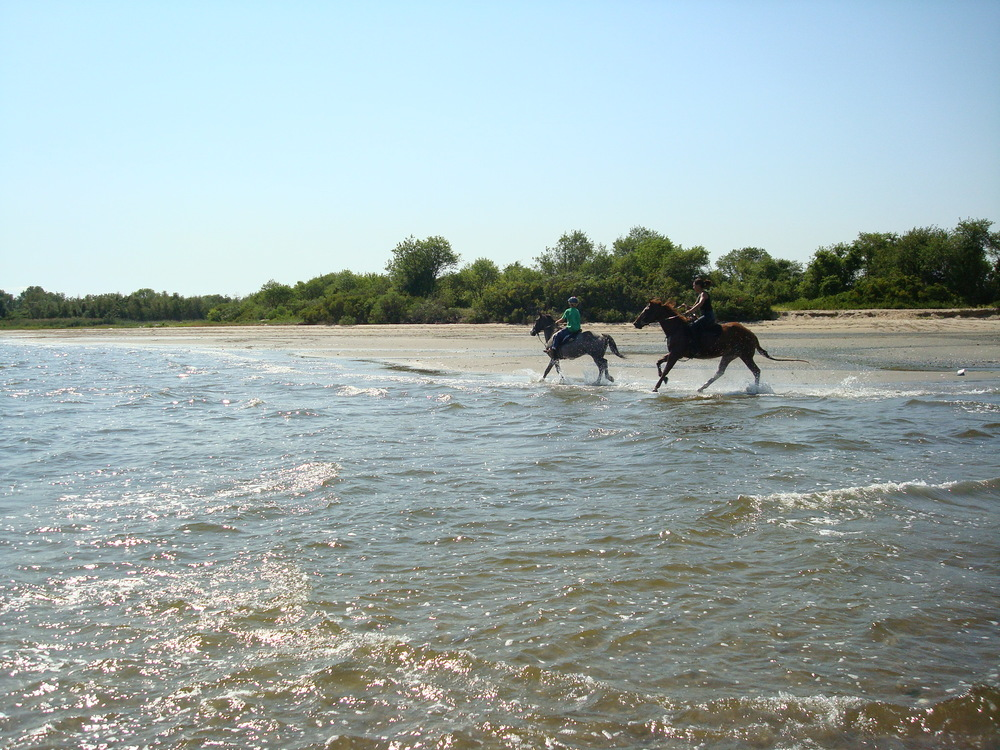HORSES 3-02.JPG