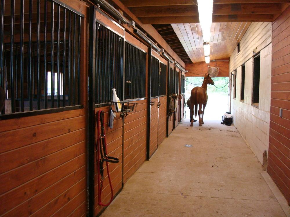 HORSES 4-01.JPG