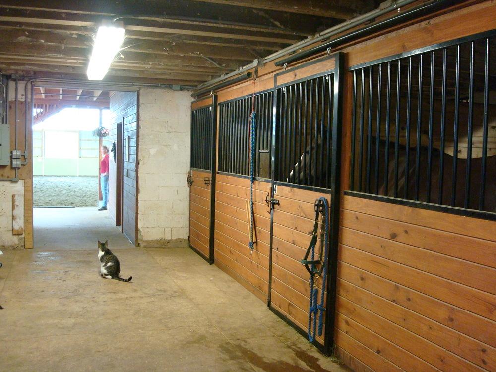 HORSES 4-02.JPG