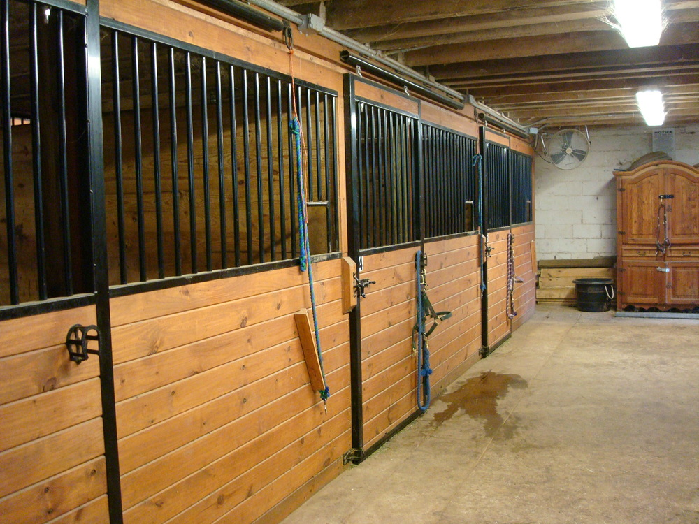 HORSES 4-05.JPG