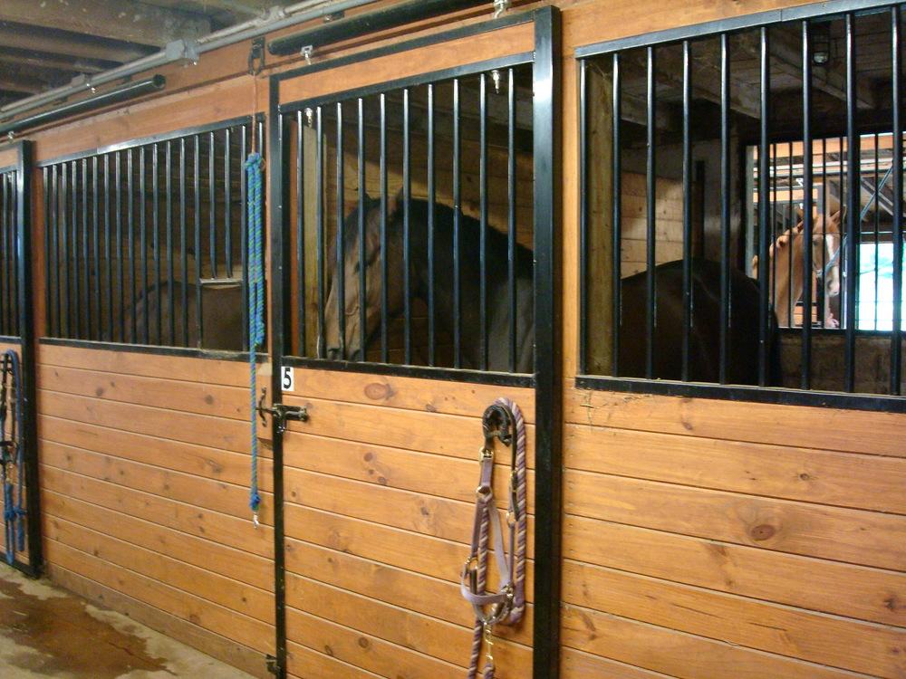 HORSES 4-06.JPG