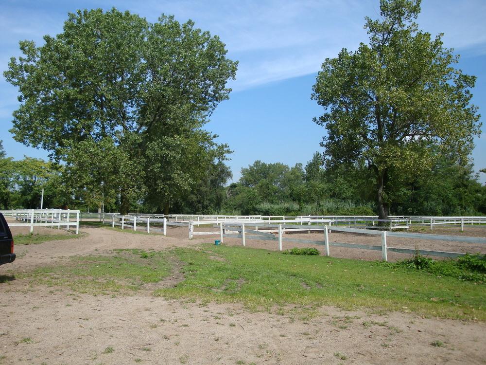 HORSES 3-21.JPG