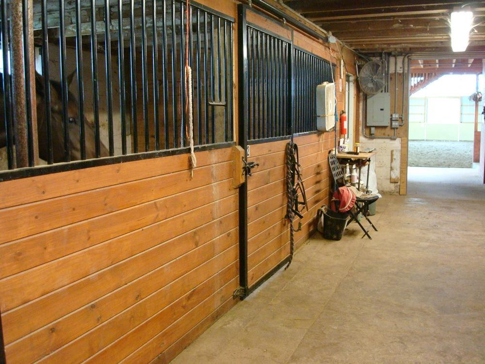 HORSES 4-07.JPG