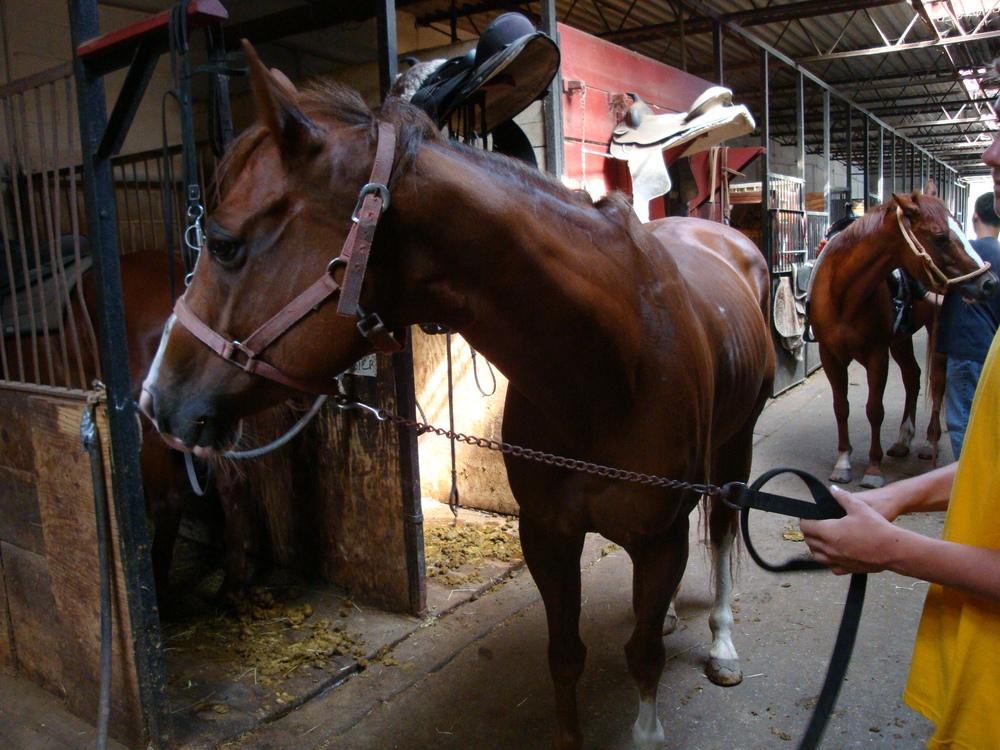HORSES 3-26.JPG