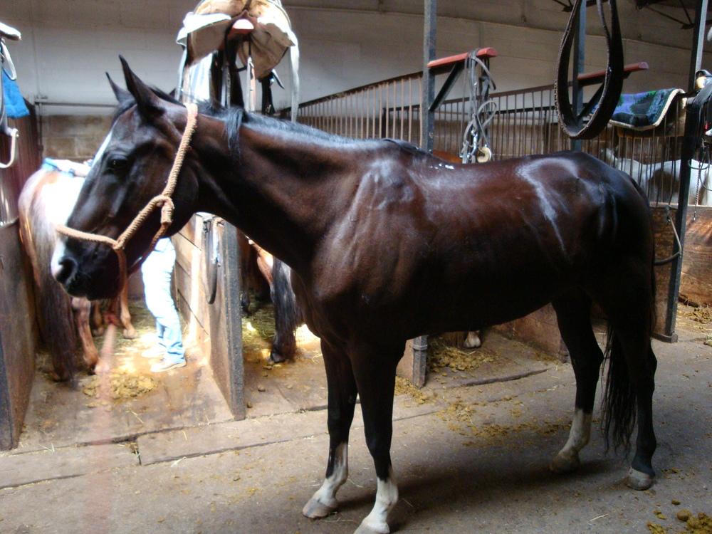 HORSES 3-27.JPG