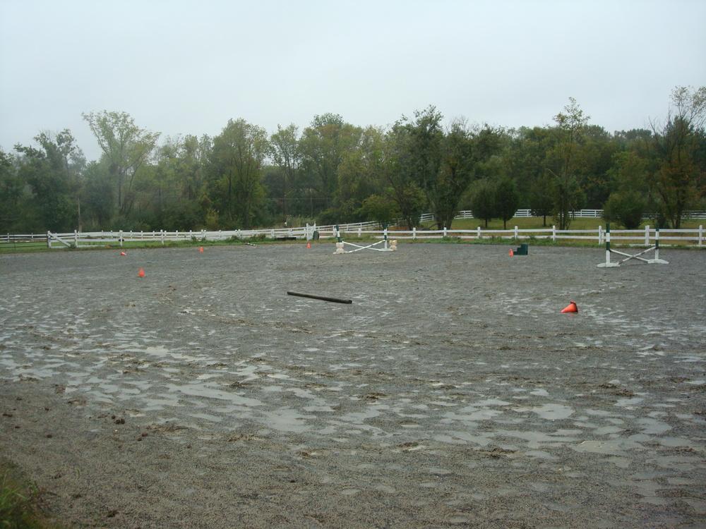 HORSES 4-15.JPG