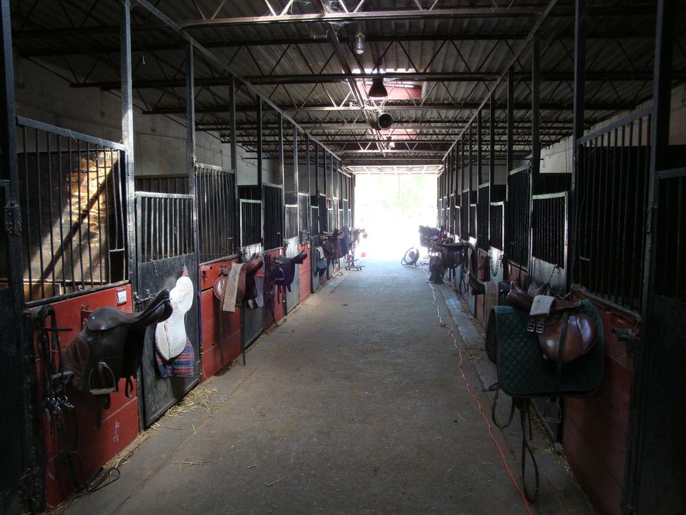 HORSES 3-28.JPG