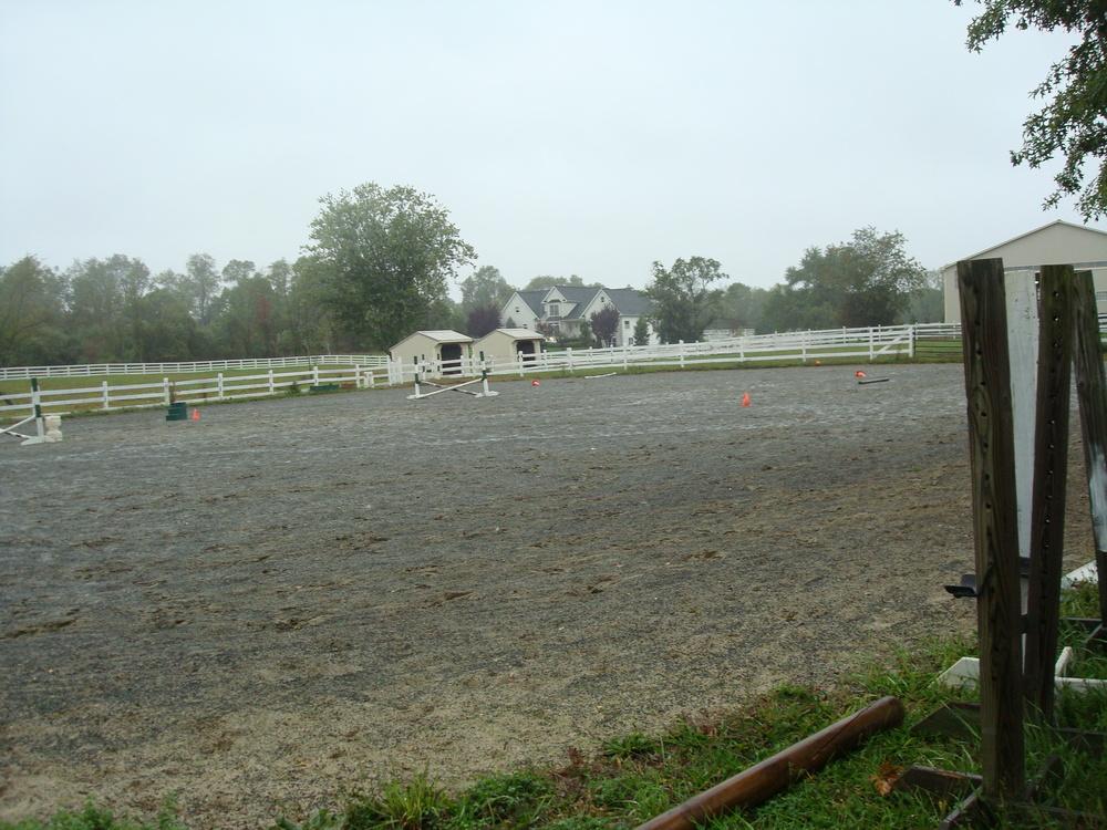 HORSES 4-16.JPG