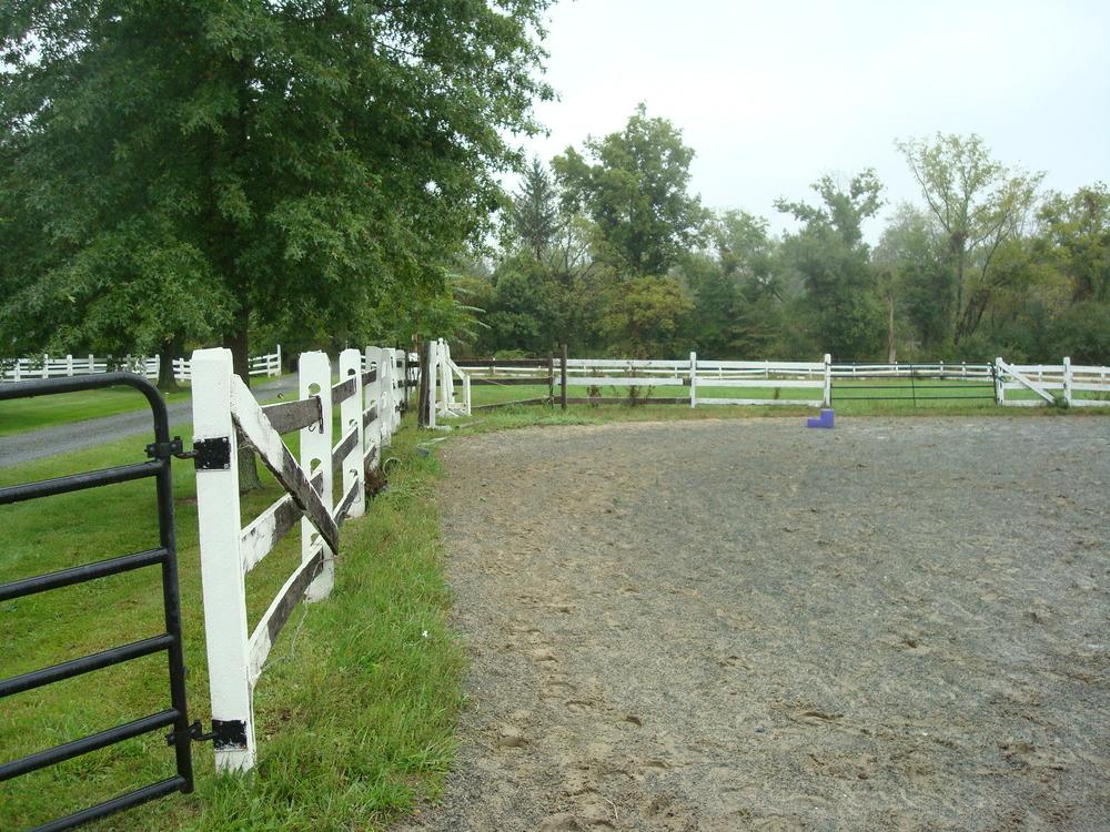 HORSES 4-18.JPG