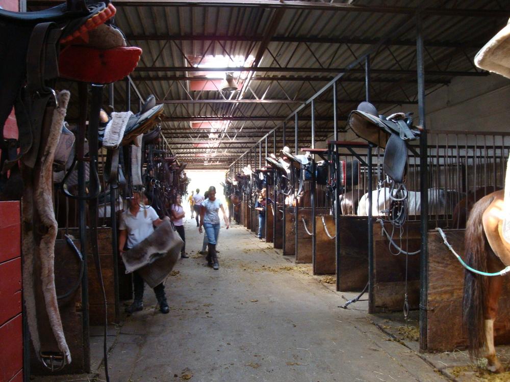 HORSES 3-29.JPG