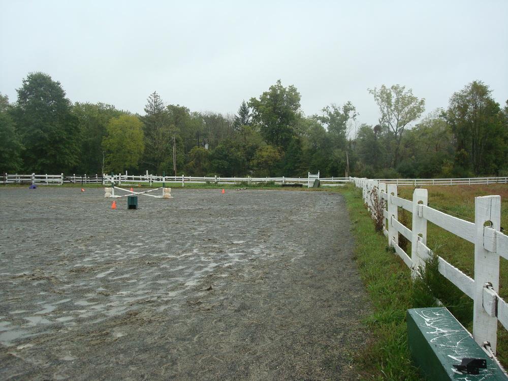 HORSES 4-20.JPG