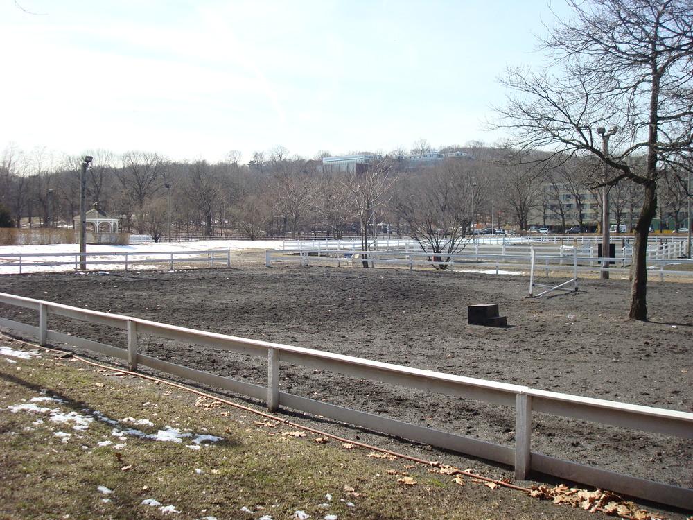 HORSES 5-02.JPG