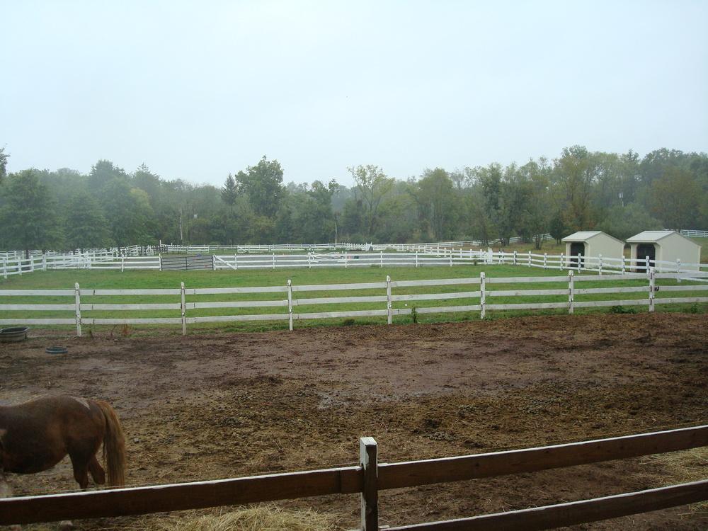HORSES 4-27.JPG
