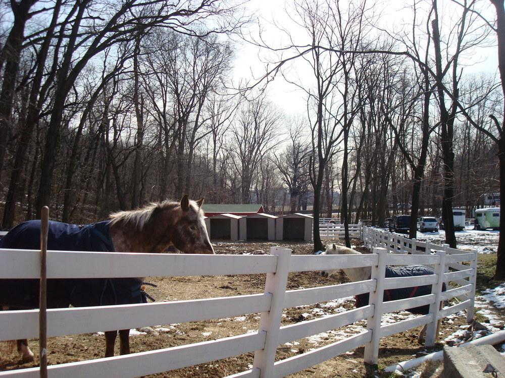 HORSES 5-06.JPG
