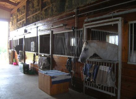 HORSES 6-02.jpg