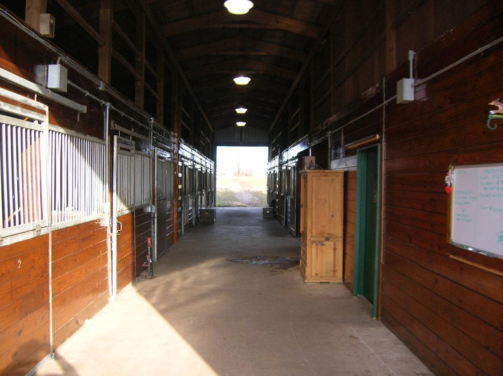 HORSES 6-01.JPG