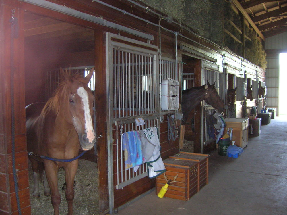 HORSES 6-04.JPG