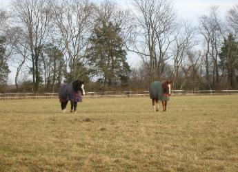 HORSES 6-06.jpg