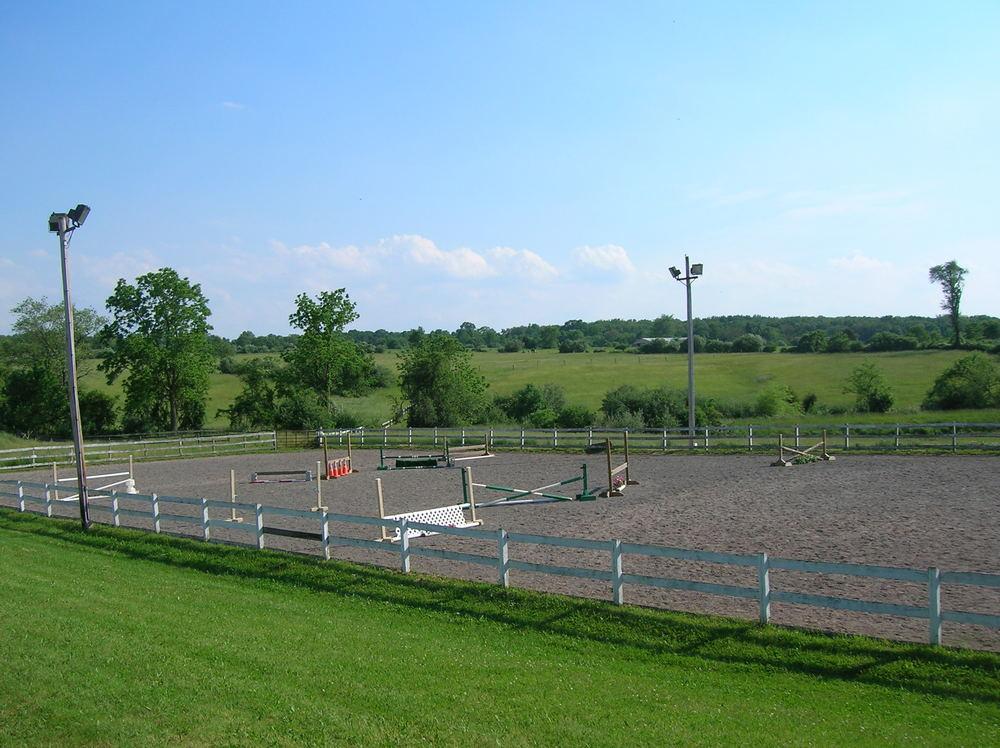 HORSES 6-09.JPG