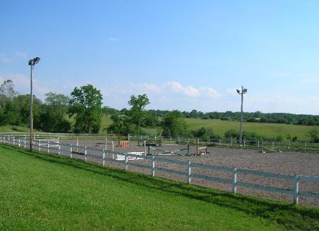 HORSES 6-11.jpg