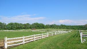 HORSES 6-16.jpg