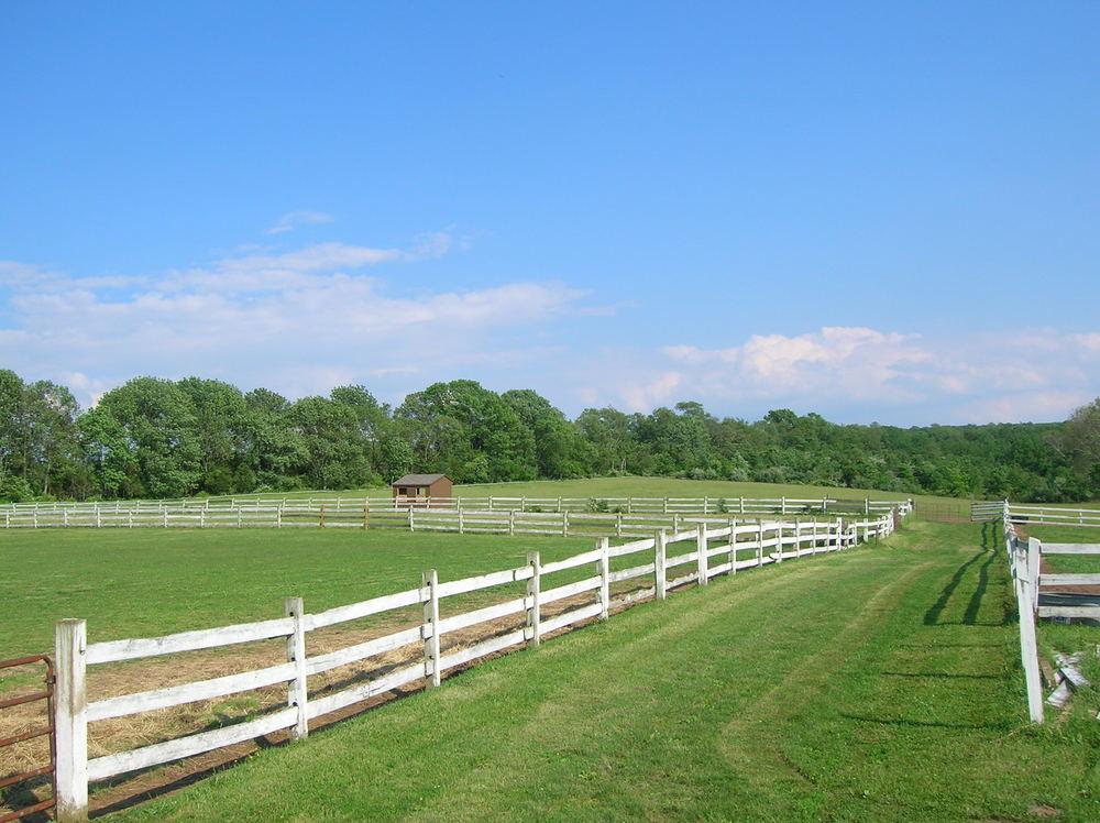 HORSES 6-17.JPG